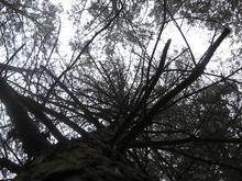 Drzewo /fot. Weronika Rudnik